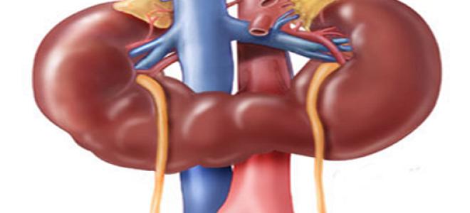 Подковообразная почка — симптомы и лечение