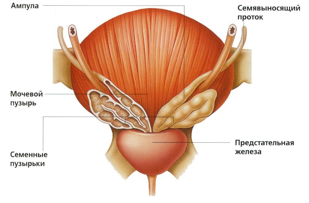Схема лечения бактериального простатита