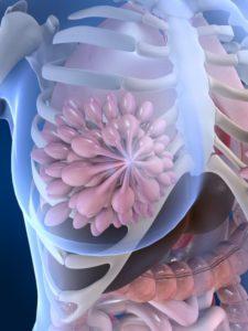 Аденома матки, яичников, молочной железы