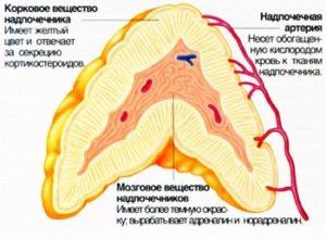Альдостерома