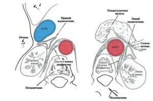 Ортостатическая проба надпочечников